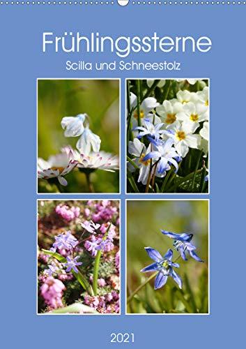 Frühlingssterne Scilla und Schneestolz (Wandkalender 2021 DIN A2 hoch)