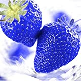 FastDirect Semillas de Fresas Azules Gigantes Frutales Ecologicas 50 PCS Semillas de...