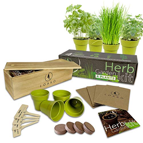 Indoor Herb Garden Starter Kit | 4 Non-GMO Herbs | Beginner Friendly | DIY Kitchen Herbs Growing Kit | Wooden Box | Perfect Gift Idea | Basil, Parsley, Cilantro, Chives