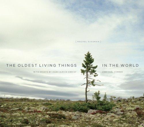 Buchseite und Rezensionen zu 'Sussman, R: Oldest Living Things in the World' von Rachel Sussman