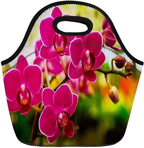 haoqianyanbaihuodian Bolsas de almuerzo rosa Phalaenopsis polilla dendrobium orquídea flor en invierno primavera bolsa de almuerzo bolsa de almuerzo bolsa portátil bolsa de picnic bolsa enfriadora