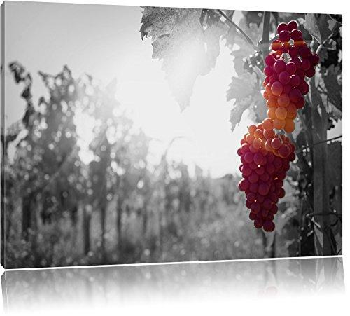 beaux raisins sur la vigne noir / blanc Taille: 100x70 sur toile, énorme XXL Photos complètement encadrées avec civière, art impression sur murale avec cadre, moins cher que la peinture ou la peinture à l'huile, aucune affiche ou un poster