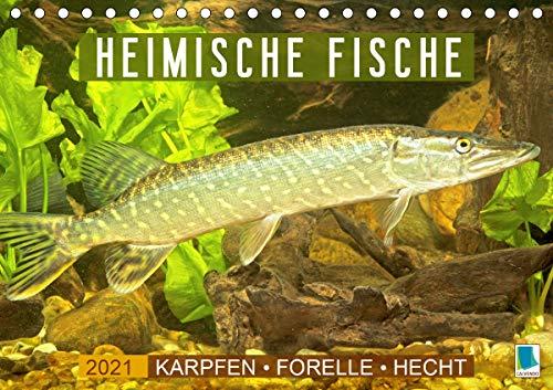 Heimische Fische: Karpfen, Forelle, Hecht (Tischkalender 2021 DIN A5 quer)