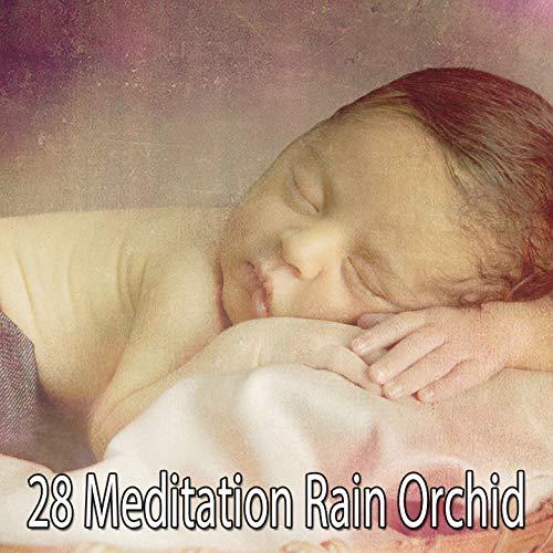 28 Meditation Rain Orchid