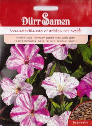 Wunderblume, Mirabilis jalapa, ca. 25 Samen