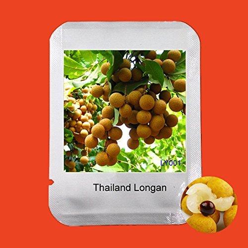 Facile grandir Packaging Professional 2Pcs Thaïlande Longan Seeds Maison et Jardin, Extra-sucré extra-Big Bonsai fruits Graines, # LY001