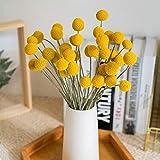 XIAOHONG 20Pcs Natural Craspedia Globosa Dried Flowers Yellow Billy Balls Bouquet Bundles, Dried Plant Flower Bunch for DIY Flower Arrangements Home Decor, Party, Wedding, Store
