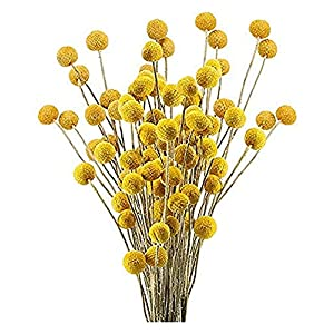 Suncatchers 30Pcs Dried Flowers Billy Button Fake Silk Yellow Flower Festival Celebration Wreath Front Door Wall Window Party Decoration Spring Summer Outdoor Ornaments (Color : Yellow)