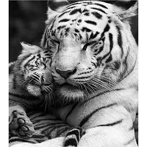 5D Diamond Painting Kits for Adults, Kids. Home Decoration, Room, Office, Gift for Him Her Father and Son Tigers 11.8x15.7 in by Megei