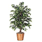 Vickerman 4' Artificial Green Smilax Bush set in Rattan Basket