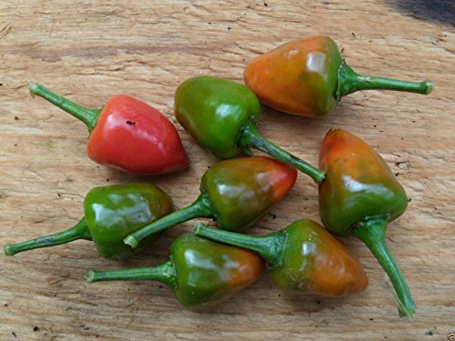 Dundicut Chili Peppers Seeds - Popular in Pakistani & Indian cooking~Very Rare(100 Seeds)