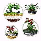 ISIK Set mit 4 weißen runden Pflanzentöpfen zum Aufhängen an der Wand, Terrarium, Luftpflanzen-Halter, Wandbehang, für Sukkulenten, in gemischten Größen