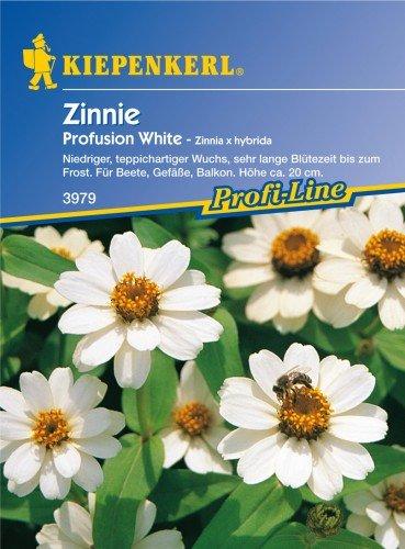 Sperli Blumensamen Zinnien Profusion weiß, grün