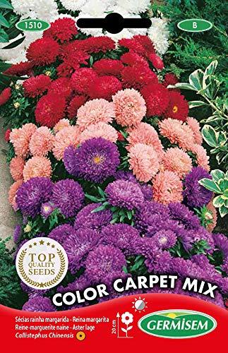Germisem Color Carpet Mix Semi di Aster Cinesi 1 g