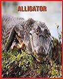 Alligator: Unglaubliche Bilder und Wissenswertes über Alligator