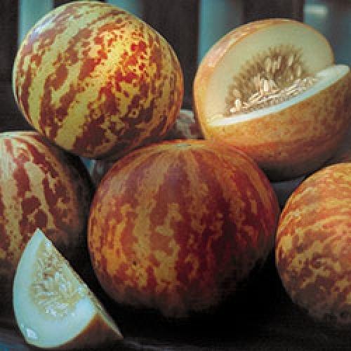 ungarische kleine Tiggermelone, extra süsses Aroma, 90 Tage, 10 Samen, BIO hu-öko-01