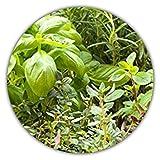 Semillas mixtas italianas de 6 hierbas aromáticas (orégano, albahaca, perejil, tomillo, romero y mejorana), 300 semillas, ideal para el alféizar/jardín propio/plantar en maceta/jardín autosuficiente