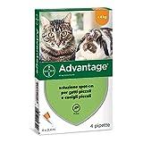 advantage Soluzione Spot On per Gatti e Conigli...