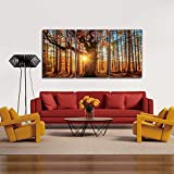 Chic Home Decor Botanical Forest 3 Piece Set Wall Art Gigclee Print Modern Multi color Photographic Sunrise in The Woods Scene, 20' x 40.5'