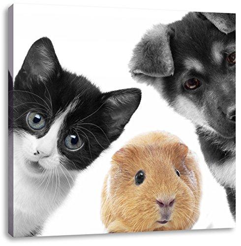 Hond Kat Trio cavia'sCanvas Foto Plein | Maat: 60x60 cm | Wanddecoraties | Kunstdruk | Volledig gemonteerd