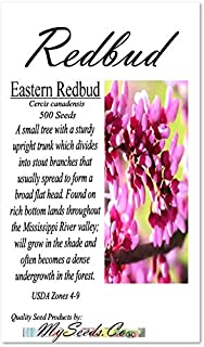 Best red bud seeds Reviews