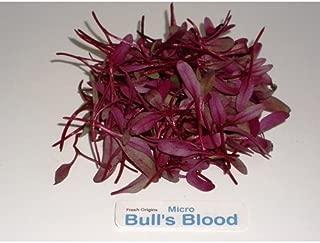 Micro Greens - Bull's Blood - 4 x 4 oz