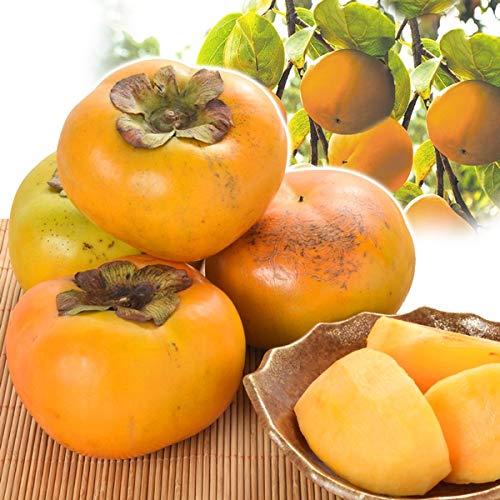 国華園 大特価 家庭用太秋柿 8kg 1組