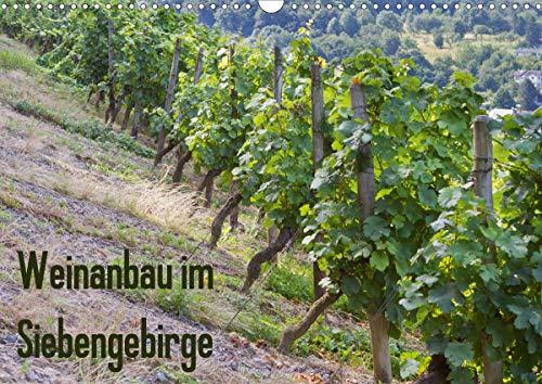 Weinanbau im Siebengebirge (Wandkalender 2021 DIN A3 quer)