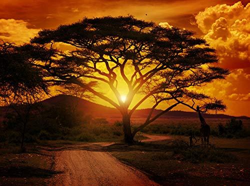 wandmotiv24 Fototapete Afrika Sonnenuntergang Größe: 350 x 260 cm Wandbild, Motivtapete, Vlietapete KTk1