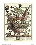 Paper Tole Supply Center Flowers of The Month December Art Print Size 16x20 inches Artist Robert Furber 16-6012