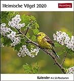 Postkartenkalender Heimische Vögel - Kalender 2020 - Harenberg-Verlag - mit 53 heraustrennbaren Postkarten - 16 cm x 17,5 cm