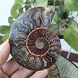 UMHUAOOL Piedra Natural 85-90mm Especímenes de amonitas Naturales Específicas Fósiles Conch Piece Decoración de Cristal para el hogar Chakra Crystal Fossil Piedras joyeria (Size : 2 Pairs)