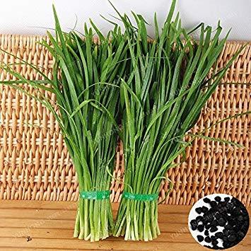 Ciboule chinoise Graines nourrissants alimentation saine vert biologique légumes Allium tuberosum Graines Ciboulette Ail Heirloom 100 PCS