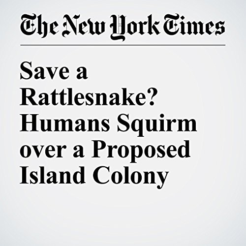 Save a Rattlesnake? Humans Squirm over a Proposed Island Colony cover art