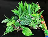 Completo 61cm acquario pianta 'naturali confezione