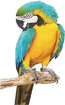 Adesivo pappagallo misura 11x14 cm circa personalizzabile