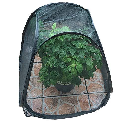 Mini Surgir Invernadero, Cubierta de Repuesto Protectora de Marco Frío de Grow House, Cloche de Frutas y Verduras Al Aire Libre