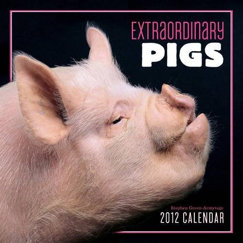 不変戦闘戦うExtraordinary Pigs 2012 Wall Calendar