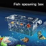 FlowersSea Boîte d'incubateur de poissons flottants en plastique avec 3 pipettes pasteur pour aquarium et écloserie