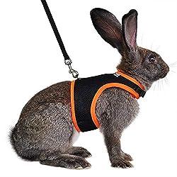 Best Rabbit Harness: Reviews & Buyers Guide 2019   RabbitSpot