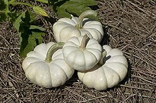 40+ Seeds: Pumpkin Seed: gooligan Pumpkin Seeds Fresh Seed