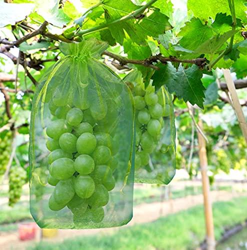 YHmall 50 Pcs Bolsas Protectoras de Uvas con Cordón 20 x 30 cm Bolsas Organza de Malla de Protección para Frutas y Jardín contra Mordeduras de Avispas Aves Mosca Drosophila y Otros Insectos