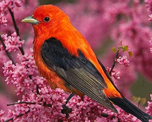 REXIAN Kit de Bordado de Punto de Cruz preimpreso Red Bird Kingfisher 11CT DIY para Sala de Estar para Adultos Dormitorio Principiante Decoración de Punto de Cruz 16x20 Pulgadas