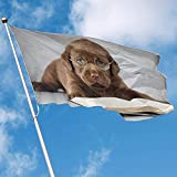 wallxxj Fahne Hof Flagge Doktor Labrador Hund Außen Banner Polyester Flagge Indoor Dekorative Flagge Garten Flagge 150X90 cm