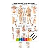 Lehrposter: Anatomie für manuelle Lymphdrainage und Massage
