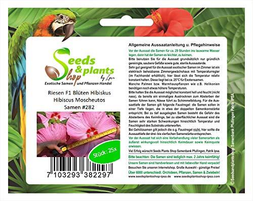 Stk - 25x Riesen F1 Blüten Hibiscus Moscheutos Pflanzen - Samen #282 - Seeds Plants Shop Samenbank Pfullingen Patrik Ipsa