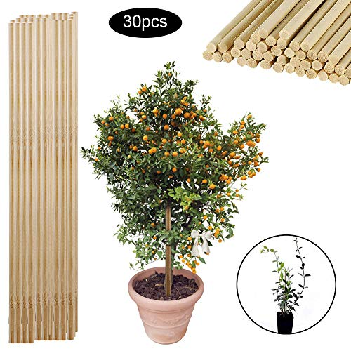 GRANDLIN 30Pcs Wooden Bamboo Plant Sticks Flower Canes Support Plants Grow Potted Stands for Household Garden Bonsai Tool