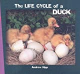 The Life Cycle of a Duck (How Things Grow)