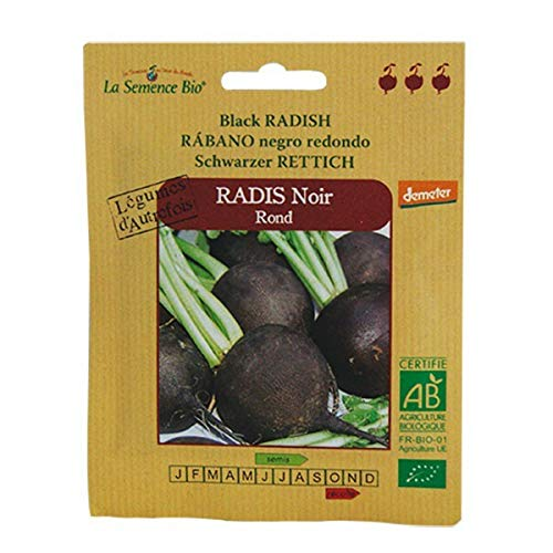 Graines Bio - Radis Noir Rond Déméter - semence biologique