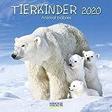 Tierkinder 2020: Broschürenkalender mit Ferienterminen. Babys von Tieren in süßen Bildern. 30 x 30 cm